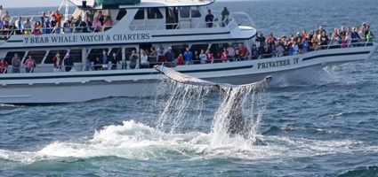 425-1-privateer-IV-whale-watch-boat-gloucester-cape-ann-boston-ma