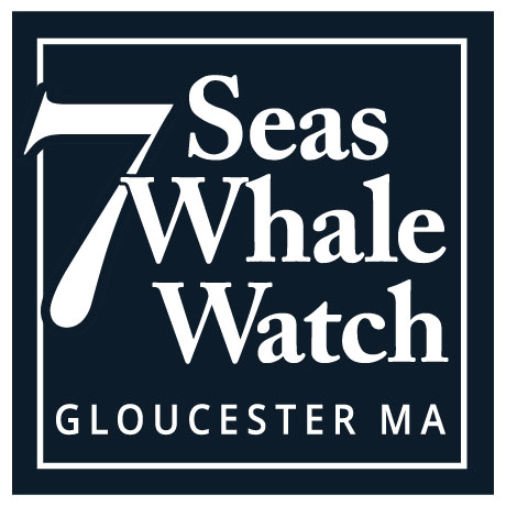7 Seas Whale Watch Gloucester Mobile Logo