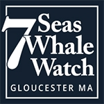 7 Seas Whale Watch Gloucester MA 888-283-1776