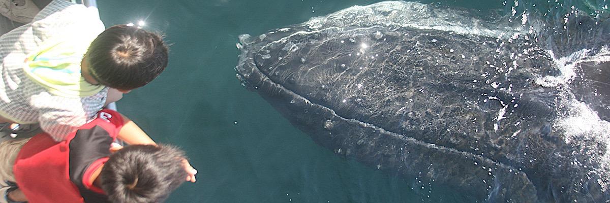 Whale-Watch-7Seas-Whale-Boat
