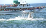 A Tail-lobbing Humpback Whale